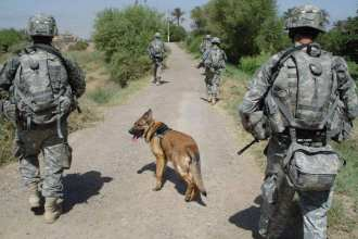 Lucca on patrol in Iraq in 2007. [She and her handler] were returning to base after a hard day's work. Lucca K458 Facebook page