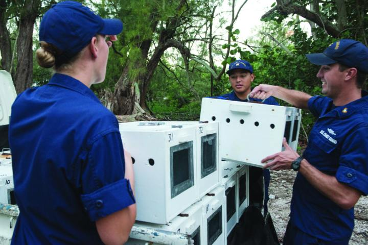 U.S. Coast Guard crewmembers assigned to the CGC Kukui help prepare Laysan ducks for translocation to Kure Atoll, Hawaii, on Sept. 3, 2014. The U.S. Coast Guard partnered with the U.S. Fish and Wildlife Service, the U.S. Geological Survey, the state of Washington, the Wildlife Center, and the state of Hawaii to translocate 28 endangered Laysan ducks. Kure Atoll is an ideal habitat for the ducks to live, providing them with dense vegetated cover, lots of arthropods to eat, fresh water, and no rats or mammalian predators. U.S. Air Force photo by Staff Sgt. Christopher Hubenthal