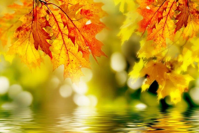 fragancias_otoño