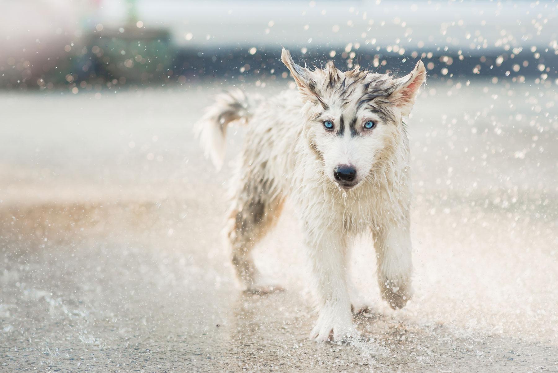 Sommer Programm in der Hundeschule Hürm