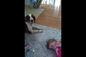 Der Kinder Flüsterer Hund