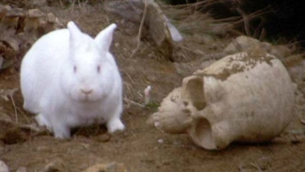 killer-rabbit-with-skull-from-Monty-Python-and-the-Holy-Grail_143934