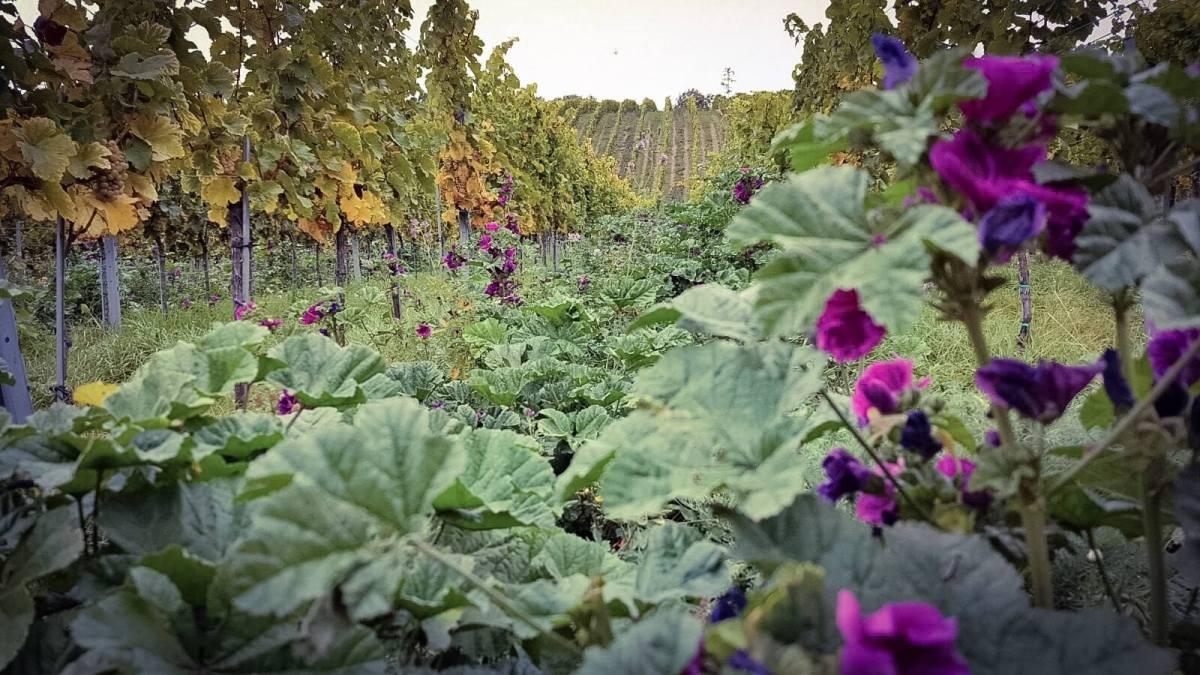 Wiener Weinwandertag – Man reiche mir den Spritzwein