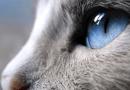 Dünya Kedilerin Gözünden Nasıl Görünür?