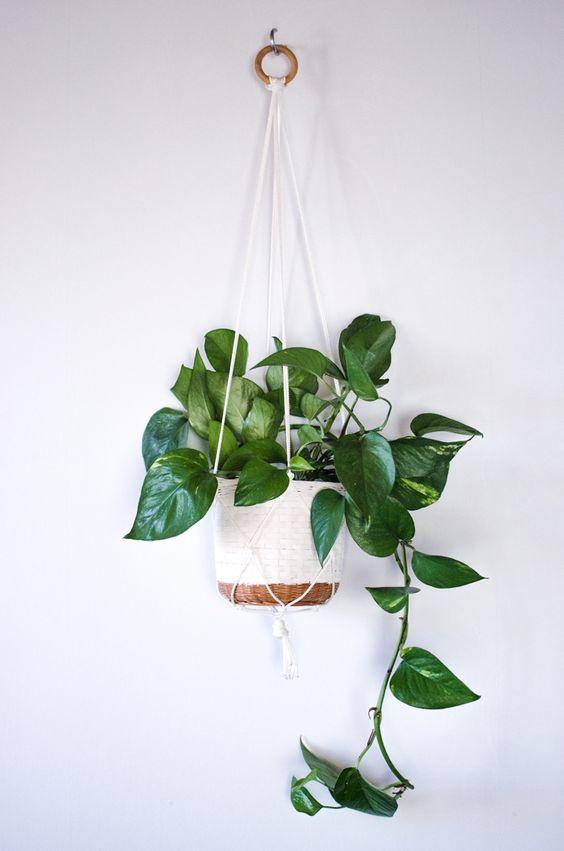 3 plantas colgantes de interior y dónde encontrarlas