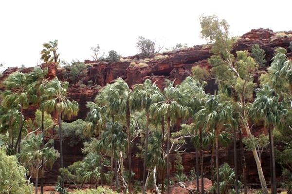 Palm Valley Australia