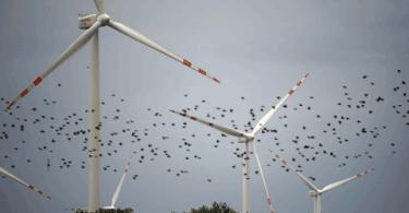 No solo los pájaros sufren la fiebre de los parques eólicos