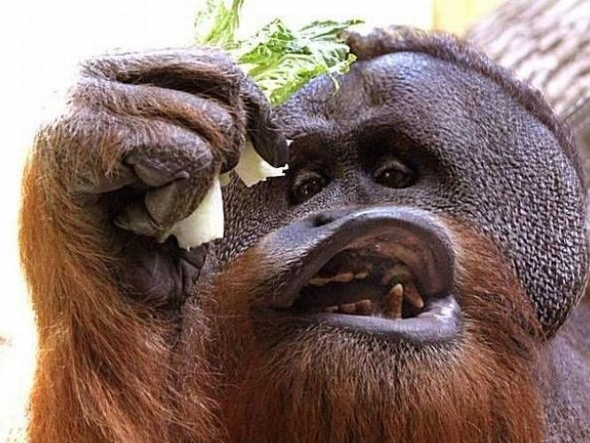 Animales menos fotogénicos
