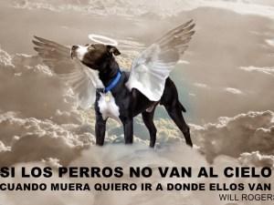 perro va al cielo