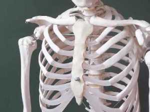 Día-Mundial-de-la-Osteoporosis  Día Mundial de la Osteoporosis Día Mundial de