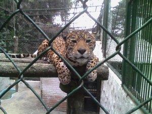 ANIMALES CHORROS MILLA