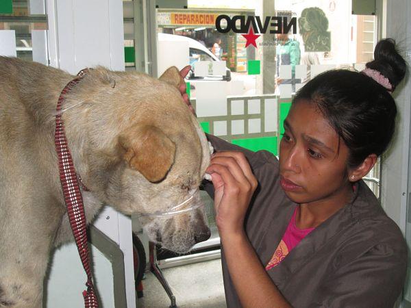 Día-del-Médico-Veterinario