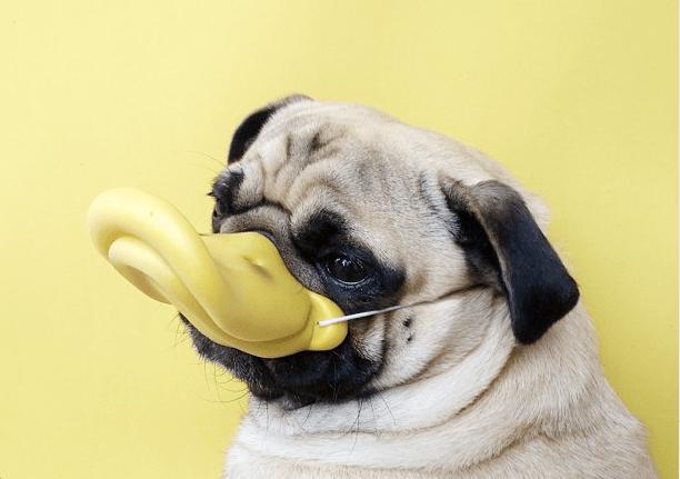las-razas-de-perros