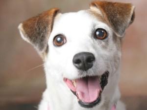 senales-que-indican-que-tu-perro-es-feliz