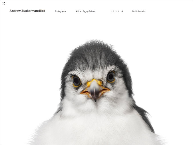birdbook01