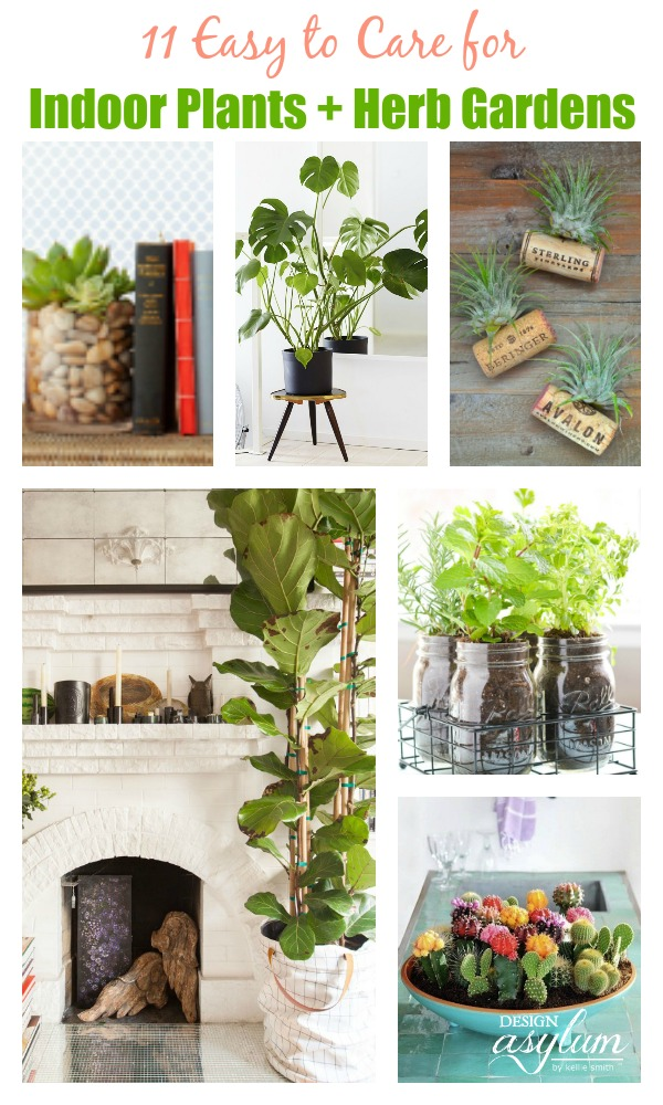 11 easy to care for indoor plants herb gardens design for Easy to take care of indoor plants