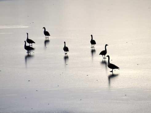 Winter in Michigan -frozen lake