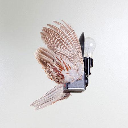 Birds-of-Aperture4