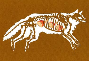 Bone-A-Day-8-640x442