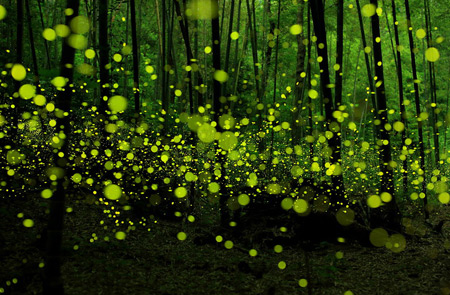 fireflies-1