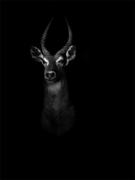owen-animals-(3)