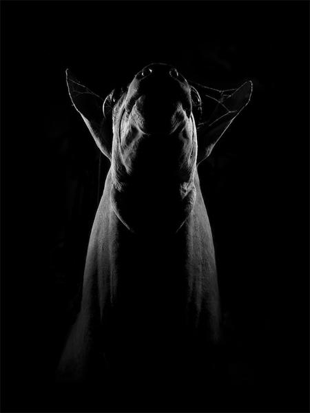 owen-animals-(6)