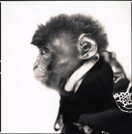 Monkey-Series-9-640x653