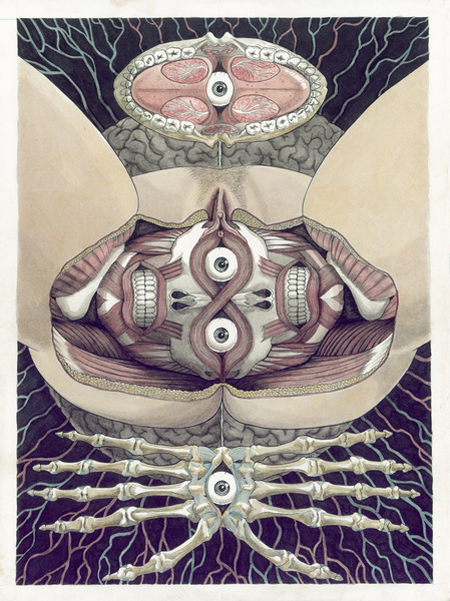 anatomical-prints