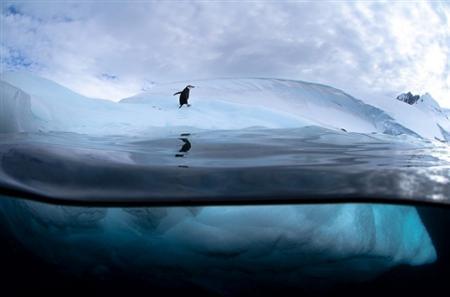antartic-photo