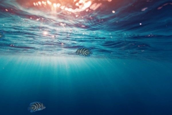 Charm Aquarium Animated Wallpaper Preview