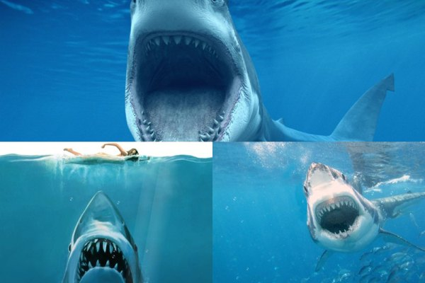Shark Attack Animated Wallpaper Preview