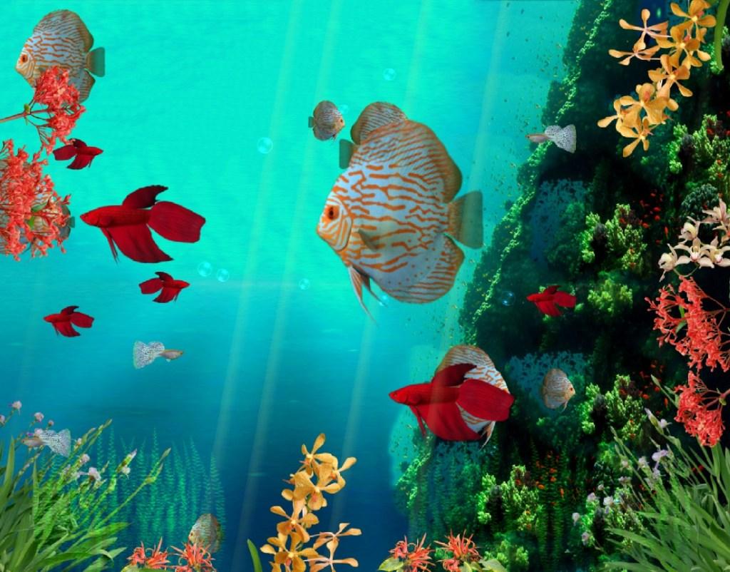 Download coral reef aquarium 3d animated wallpaper - Fish tank screensaver pc free ...