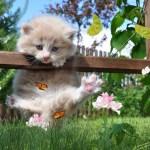 Sweet Kittens Animated Wallpaper