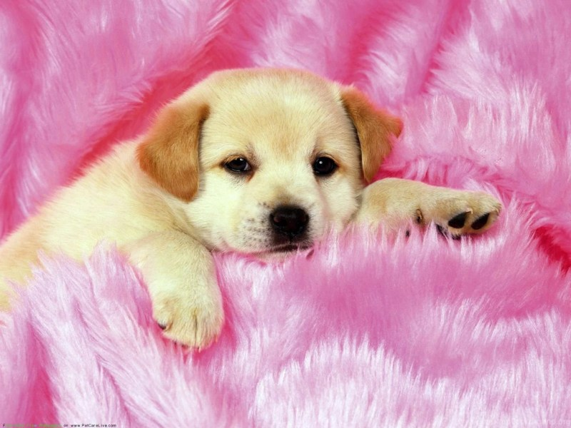 Large Of Cute Puppies Sleeping