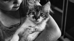 5 Tips For Bringing Home A New Kitten When You Have Small Children