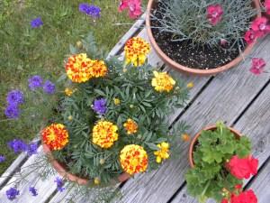 5 Creative Garden Ideas For 2016