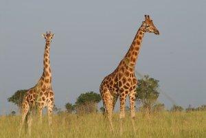 À Descoberta dos Big Five no Quénia