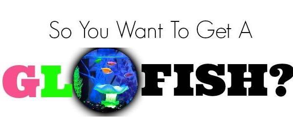 GloFish Aquarium Review