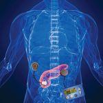 fulllength-pancreas-1