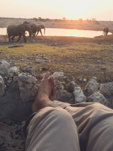 Namibia - Watching elephants, giraffes, rhinos and antelopes by the watering holes