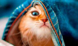 imagenes-gatos-