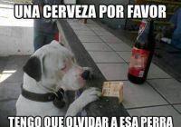 59003d7c094382b50f6530aea88b30c2--funny-dogs-funny-humor