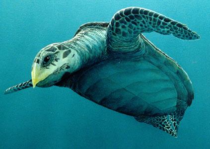 NOMES DE ANIMAIS EM EXTINÇÃO NO BRASIL tartaruga marinha