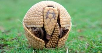 Existem muitos animais em perigo de extinção no país