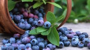 Mirtillo Nero: un piccolo frutto dalle grandi proprietà