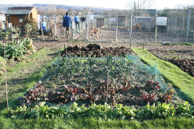 allotment_4