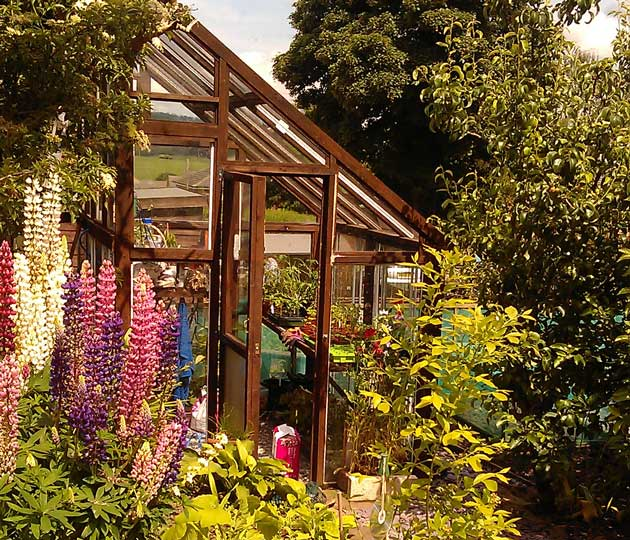 greenhouse-and-lupins