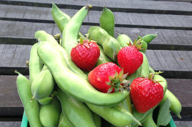 broad-beans-and-strawberries