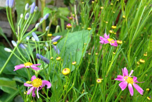 flowers-front-garden