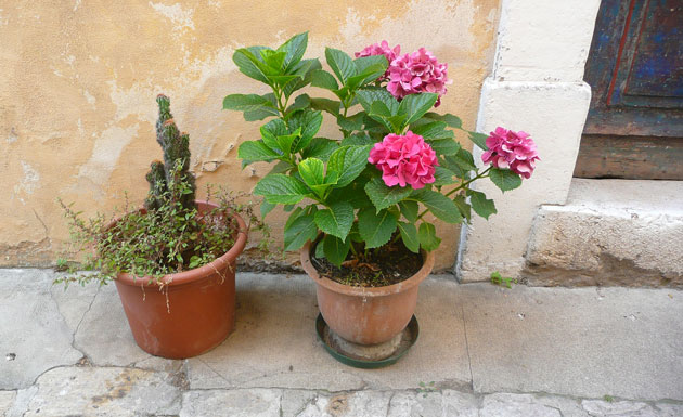 mouans-sartoux-container-gardening